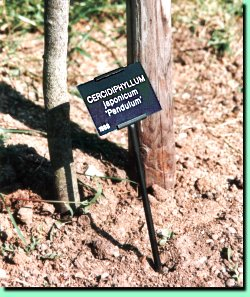 Tree Labels